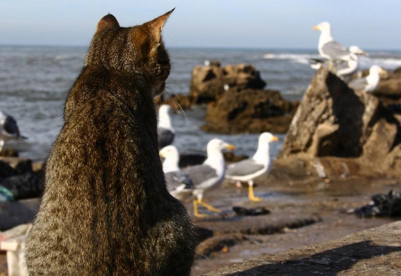 I gatti della colonia di Su Pallosu a rischio: interviene la Lav