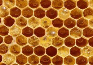Sagra del miele di Montevecchio 2019