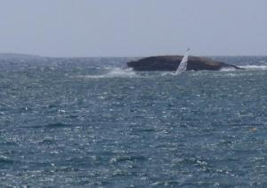 Portu Suedda